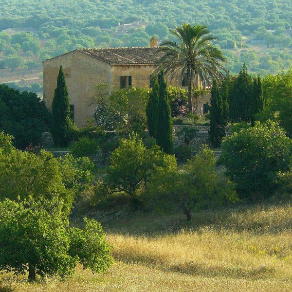 Kräuter der Toskana auf Olivenöl